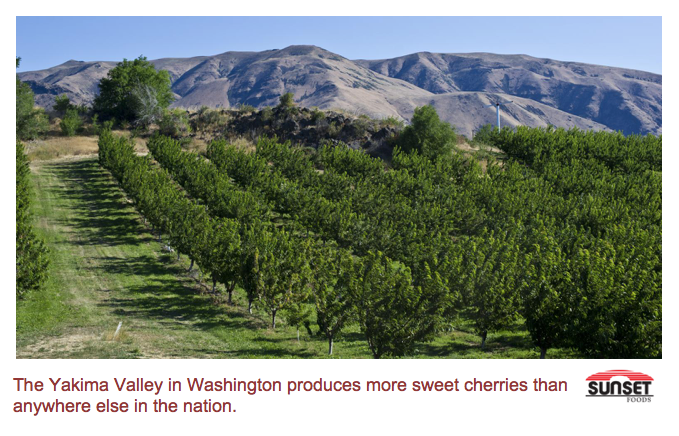 Cherry orchard in the Yakima valley