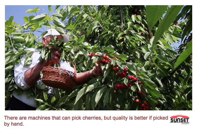 Cherry being picked by hand