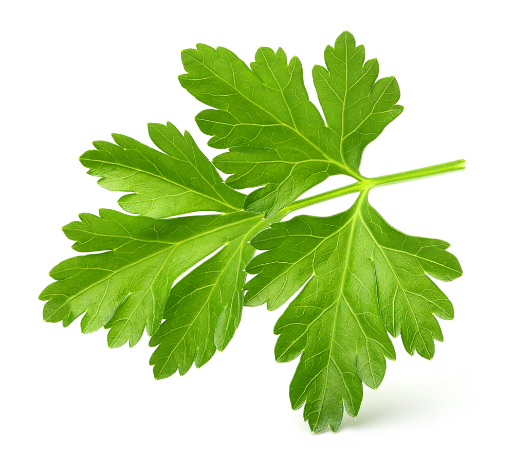 parsley foodpedia dr steven lin