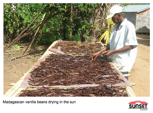 Vanilla beans drying in the sun